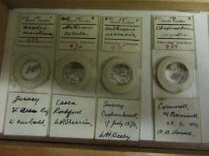 Herbarium seeds catalogued by Hume
