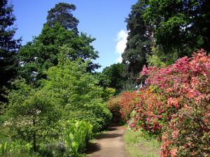 Field Trip to Sir Harold Hillier Gardens