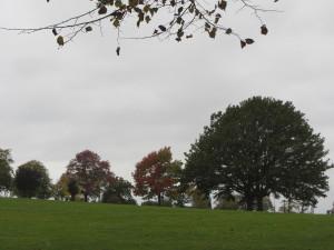 Tree Walk – Battersea Park