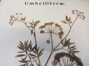 IMG_7915 Herbarium