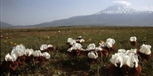 Along the Turkish Border to Mount Ararat
