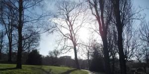 Tree Walk – Horniman Museum Gardens