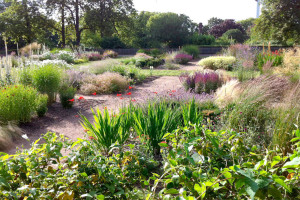 Guests and Invaders: plant life in Ruskin Park