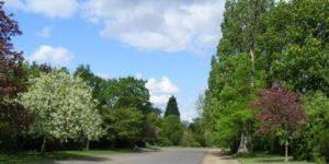 Tree Walk – Dulwich Park