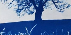 Plant Recording with Cyanotype Photography