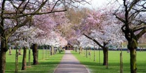Spring Tree Walk- Battersea Park
