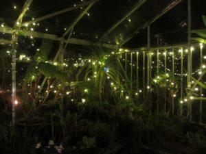 img_4538-greenhouse-resized