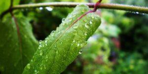 Lost Effra Rain Garden