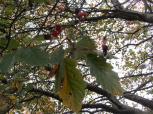 Autumn Tree Walk