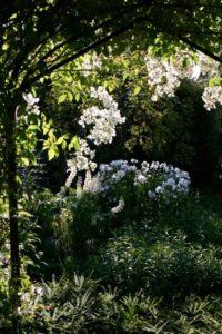 Botanical Biography – Vita Sackville West
