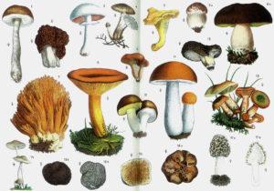 Fungi Palace