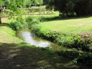 Grassland flora – Morden Hall Park