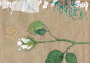 Painting in Botanical Art – Beginners