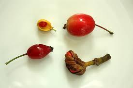 Basic Botany – Seeds and Fruits