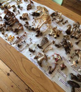 Magic Mushroom Mondays (Fungi Identification)