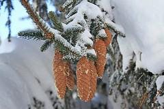 Make Your Own Botanical Advent Calendar – Seasonal Activities for Children