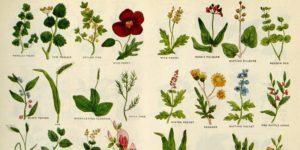 Herbal Medicines – A talk