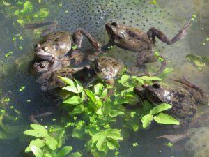 Making Summer Memorable – Pond Dipping and Habitats