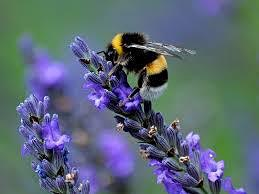 Making Summer Memorable – Pollinators and Honey