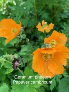 Making Summer Memorable – Botany Club!
