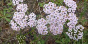 Wild Plant Walk – All Saints Churchyard SE19