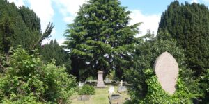 Tree Walk – Streatham Cemetery, Tooting