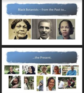 Black Botanists from the Past to the Present