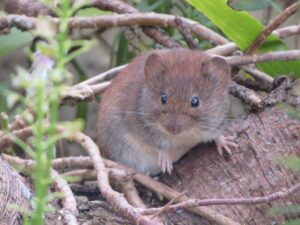 The Big World of Small Mammals