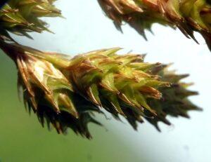 Field Botany Skills:  Identifying Wild Plants # 2 (6 in series)