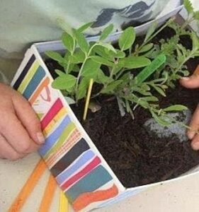 Easter Holiday Activity – Shoebox Herb Gardens* – For children aged 4-11