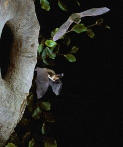 Bat Night in the SLBI Garden