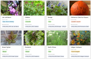 London Freedom Seed Base: a collaborative seed saving data project