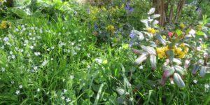 Open Evening in the SLBI garden