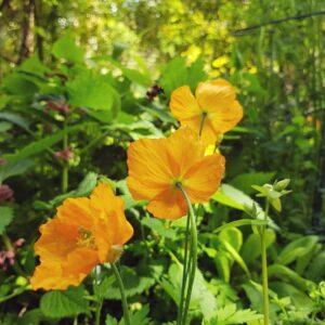 Hidden Wildflowers – An Evening Walk