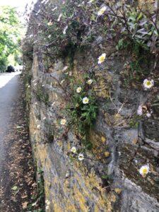 Pavement Prowl- A walk around Tulse Hill
