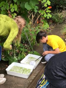 Summer Holiday Activities – Pond dipping, Wildlife and Pebble Painting*