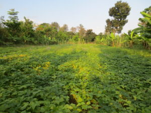 Plants, Farms, Climate and the Biodiversity Crisis – an Online Talk