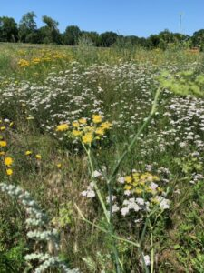 Woolwich Common Plant Hunt