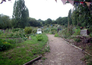 One Tree Hill Allotments: A botanical survey jointly with the LNHS