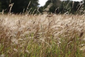Beyond the Green Carpet: The importance of grasslands in the era of climate breakdown – An online talk